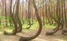 Кривой лес, фото №2 из 15