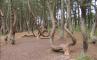 Танцующий лес, фото №2