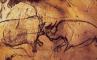 Носороги во франции, фото №7