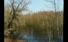 Водоросли пруда, апрель 2004, фото №2