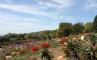 Ботанический сад Кирстенбош, фото №10 из 29