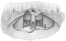 Железный дом, фото №2